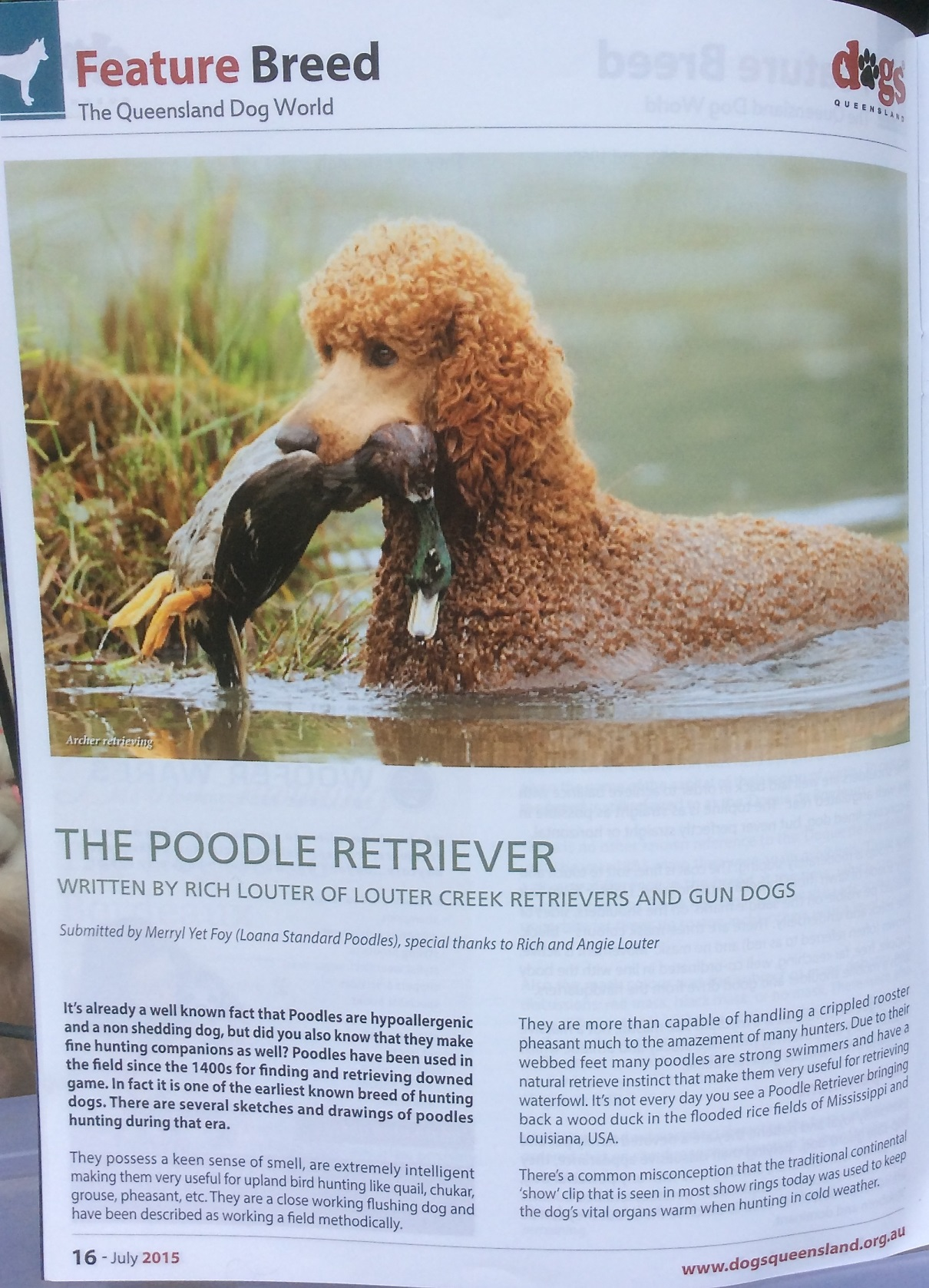 Dogs QUEENSLAND Magazine July 2015 (Australia)