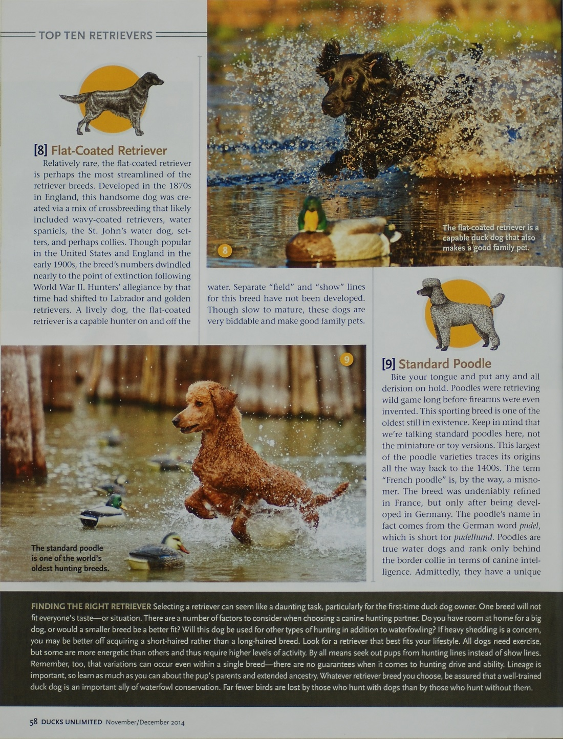 Ducks Unlimited Magazine Nov-Dec 2014