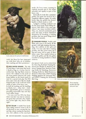 Layla featured in Gun Dog Magazine.