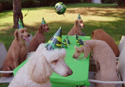 "Go to Salty Dog to send this ""Poodle Birthday Party"" card."